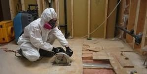 Water Damage Restoration and Mold Removal Process